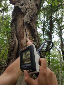 Endoscopio para búsqueda de refugio