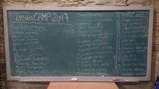 Insuacamp 2017